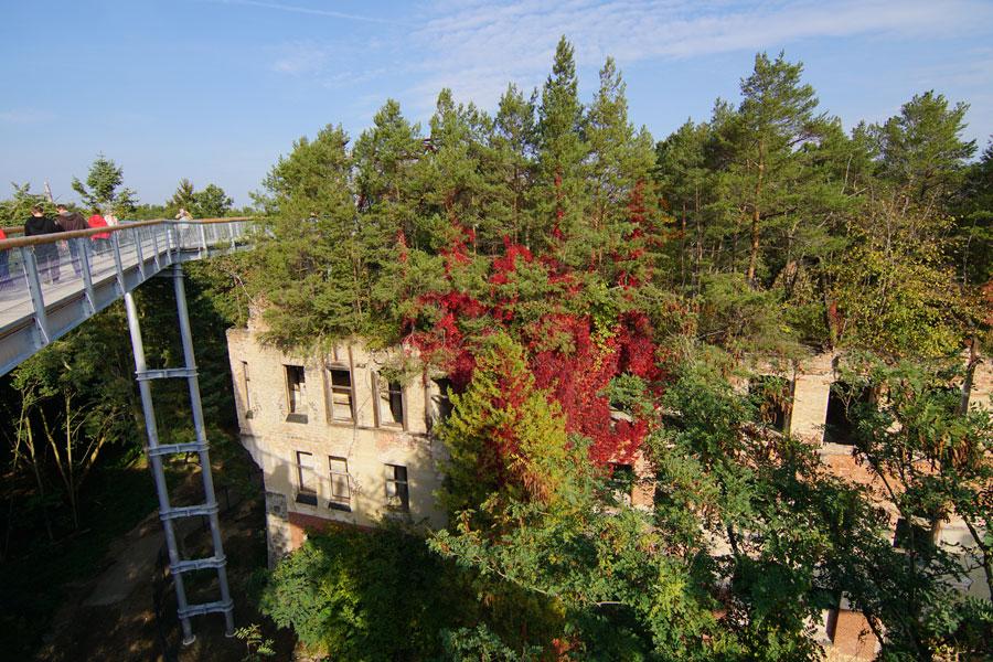 Ruine mit Dachwald